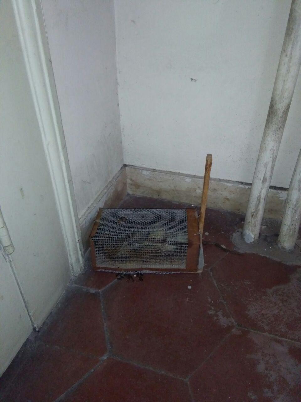 """Messina: topi e blatte negli uffici dei Beni culturali. Fp Cgil chiede ad Asp ispezione. Crocè: """"Situazione igienico- sanitaria insostenibile"""""""